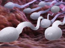 Dưỡng chất tác động đến sức khỏe sinh sản của nam giới